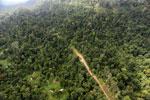 Logging road -- sabah_aerial_2441