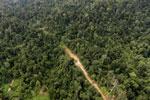 Logging road -- sabah_aerial_2442