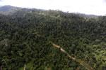 Logging road -- sabah_aerial_2445