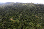 Over-logged forest in Borneo -- sabah_aerial_2446