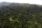 Over-logged forest in Borneo -- sabah_aerial_2447