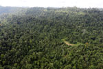 Over-logged forest in Borneo -- sabah_aerial_2452
