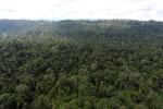Borneo rainforest -- sabah_aerial_2453