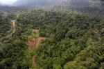 Logging road -- sabah_aerial_2454