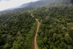 Logging road -- sabah_aerial_2457