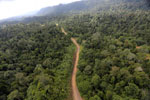 Logging road -- sabah_aerial_2458