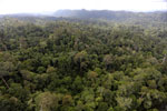 Borneo rainforest -- sabah_aerial_2461