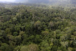 Borneo rainforest -- sabah_aerial_2462