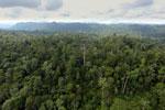 Borneo rainforest -- sabah_aerial_2464