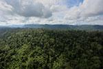 Borneo rainforest -- sabah_aerial_2465
