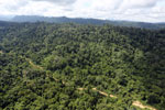 Logging road -- sabah_aerial_2466