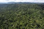 Logging road -- sabah_aerial_2467