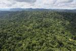Logging road -- sabah_aerial_2468
