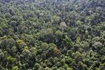 Borneo rainforest -- sabah_aerial_2484