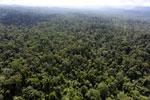 Borneo rainforest -- sabah_aerial_2485