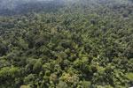 Borneo rainforest -- sabah_aerial_2486