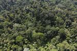 Borneo rainforest -- sabah_aerial_2487