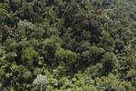 Borneo rainforest -- sabah_aerial_2488
