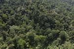 Borneo rainforest -- sabah_aerial_2489