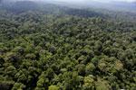 Borneo rainforest -- sabah_aerial_2491