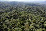 Borneo rainforest -- sabah_aerial_2492