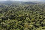 Borneo rainforest -- sabah_aerial_2493