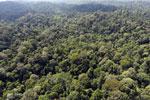 Borneo rainforest -- sabah_aerial_2494