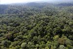 Borneo rainforest -- sabah_aerial_2495