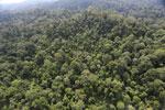Borneo rainforest -- sabah_aerial_2496