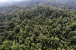 Borneo rainforest -- sabah_aerial_2497