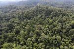 Borneo rainforest -- sabah_aerial_2498