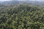 Borneo rainforest -- sabah_aerial_2499