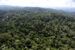 Borneo rainforest -- sabah_aerial_2500