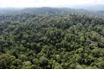 Borneo rainforest -- sabah_aerial_2501