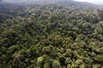Borneo rainforest -- sabah_aerial_2502