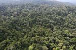 Borneo rainforest -- sabah_aerial_2503