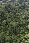 Borneo rainforest -- sabah_aerial_2504