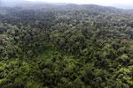 Borneo rainforest -- sabah_aerial_2505