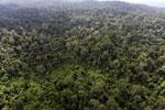 Borneo rainforest -- sabah_aerial_2506
