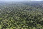 Borneo rainforest -- sabah_aerial_2507