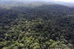 Borneo rainforest -- sabah_aerial_2508