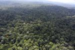 Borneo rainforest -- sabah_aerial_2509