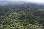 Borneo rainforest -- sabah_aerial_2510