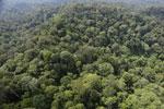 Borneo rainforest -- sabah_aerial_2511