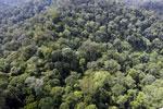 Borneo rainforest -- sabah_aerial_2512