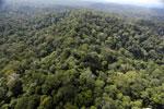 Borneo rainforest -- sabah_aerial_2513