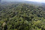 Borneo rainforest -- sabah_aerial_2514