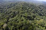 Borneo rainforest -- sabah_aerial_2515
