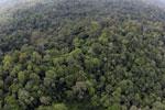 Borneo rainforest -- sabah_aerial_2516