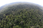 Borneo rainforest -- sabah_aerial_2517